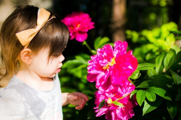 Flowers-9816