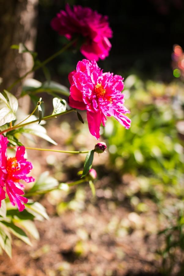 Flowers-9820